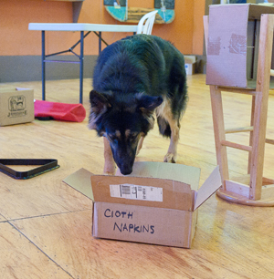 Dog searching box in Nosework